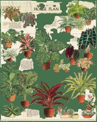 - Zimmerpflanzen – Vintage Puzzle - 1000 Teile